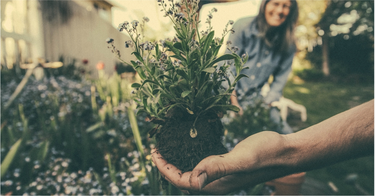 Gardening is a therapeutic hobby for autistic people.