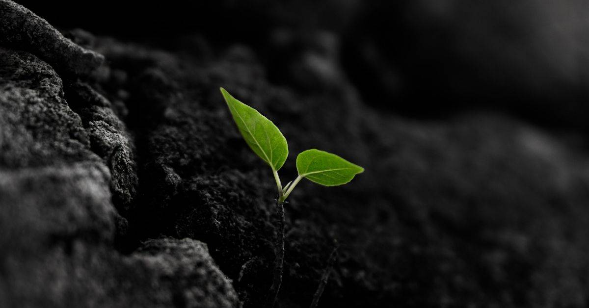 A small green sprout with two leaves in dark soil