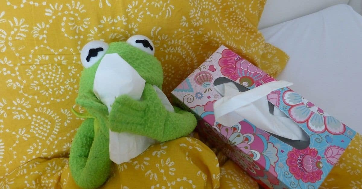 An old Kermit the Frog puppet in bed under a yellow patterned quilt with a box of kleenex, holding one tissue to his face